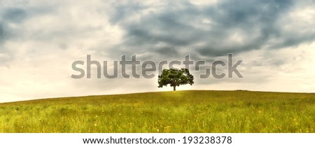 tree in the meadow (153) panorama format - stock photo