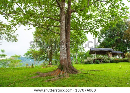 Tree in the middle of the lawn. Within the park. Rear accommodation for tourists. - stock photo