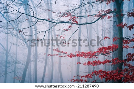 Tree in the misty autumn forest  - stock photo