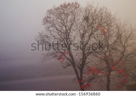 Tree in the morning mist behind the glass - stock photo