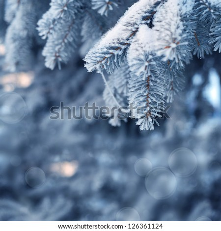 Tree in the morning winter forest - stock photo
