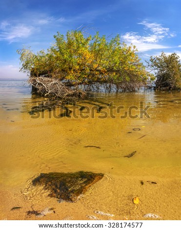 tree in the ocean near the shore with long roots. summer