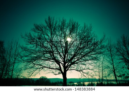 tree in the rays of the rising sun - stock photo