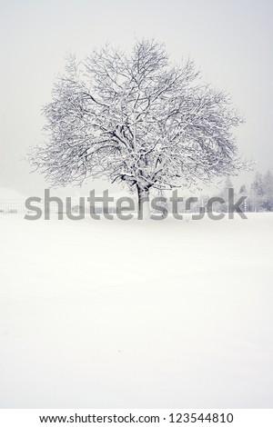 tree in the snow - stock photo