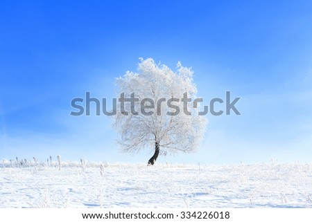 Tree in the snow in a field in winter. Beautiful white winter. Blue sky. - stock photo