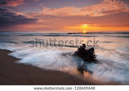tree in the water at sunset - stock photo