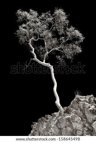 Tree in West Macdonnell ranges - stock photo