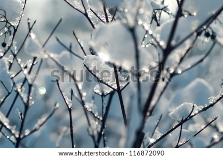 Tree in winter with snow - stock photo