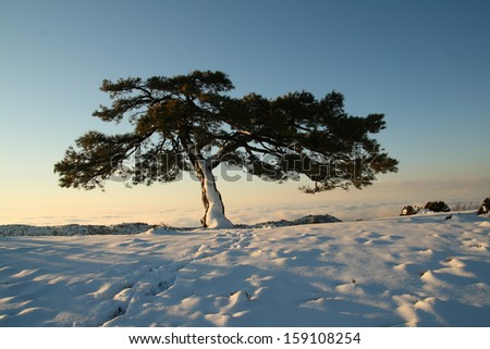 Tree in winter, with snow
