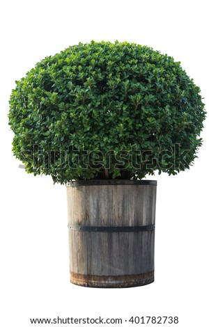 tree in wood pot isolated on white background