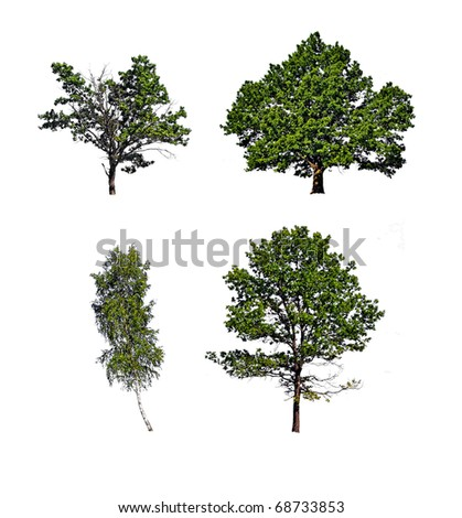 tree insulated on white background - stock photo