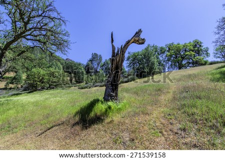 Tree is struck by lightning at Pinnacles National Park in Monterey County, California, near the Salinas Valley, on the California Central Coast. - stock photo