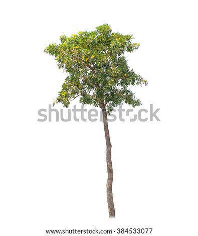 Tree isolate on white background