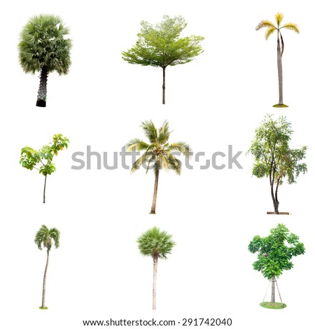 tree isolated colection , element for design garden and decoration, - stock photo