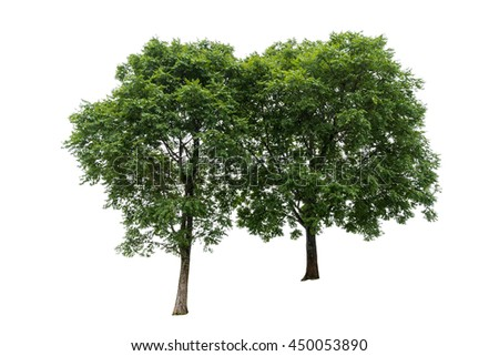 Tree isolated on a white background