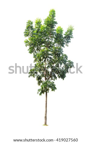 Tree isolated on white background - stock photo