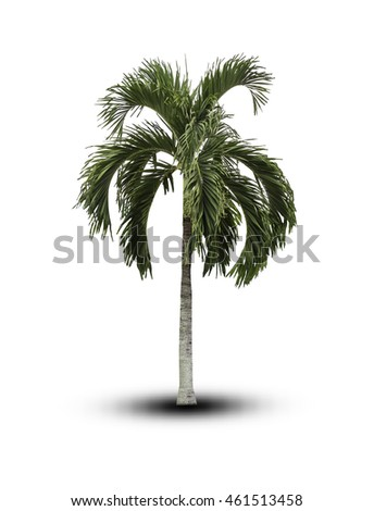 tree isolated on white background.