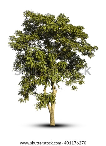 Tree isolated on white background clipping path. - stock photo
