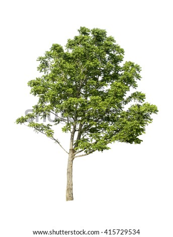 Tree isolated on white background with clipping path. - stock photo