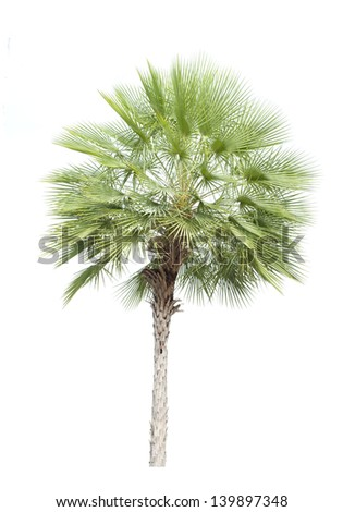 tree isolated on with background for graphic elements for decoration and design world environment day,