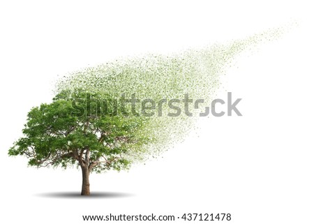 Tree isolated over white background - stock photo