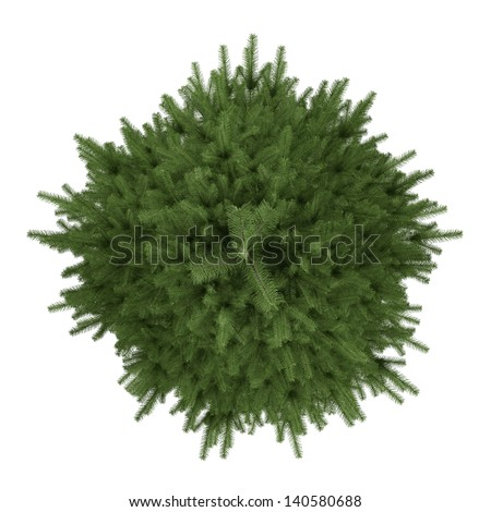 Tree isolated. Picea fir-tree top - stock photo