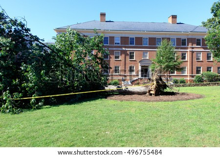 Tree knocked down by storm damage in front of brick apartment building