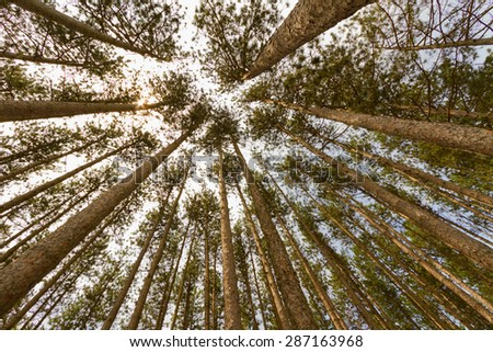 Tree landscape - stock photo
