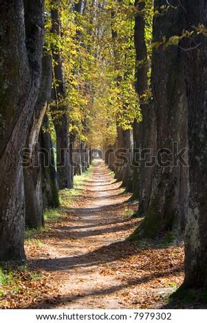 tree lane - stock photo
