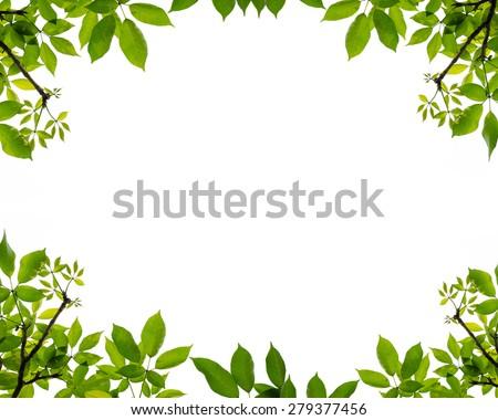 Tree Leaf Frame On White Background Foto de stock (libre de regalías ...