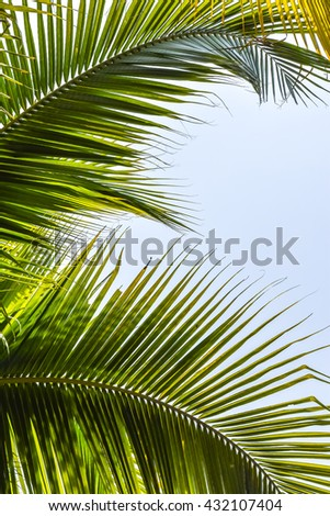 Tree leaf frame view looking up against sky on white background: Holiday summer tropical plant vacation relaxation concept: Palm Sunday religious feast greeting card design decoration backdrop idea