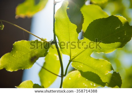 Tree leafs in the sun, stock picture - stock photo