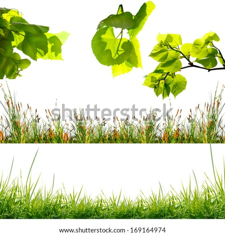 tree leafs on the white background - stock photo