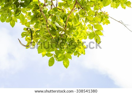 Tree leaves and sky with cloud, beneath the tree.