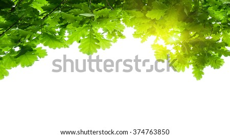 tree leaves isolated