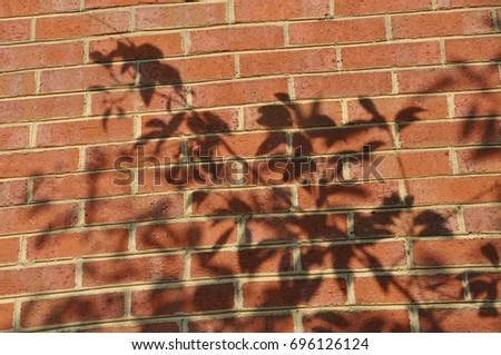 Tree leaves shadow on a brick wall
