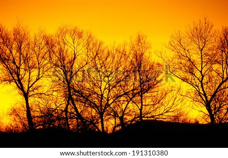 tree line at sunset, winter, Oregon, Willamette Valley