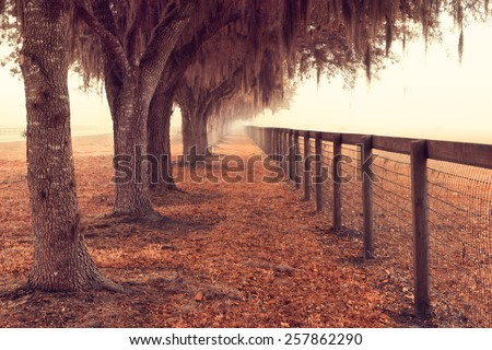 Tree lined fence next to a pasture field meadow open space in the rural country with spanish moss hanging down on a foggy misty morning looking peaceful serene relaxing solitary meditative - stock photo