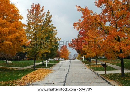 tree lined street on clear fall day - stock photo