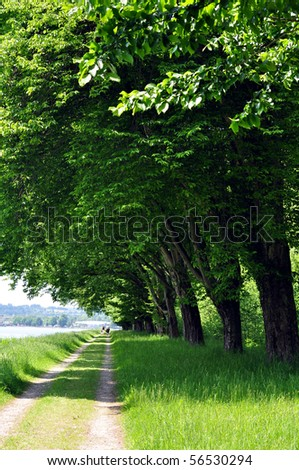 tree lined track