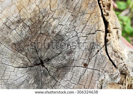 Tree Lumber Closeup - stock photo