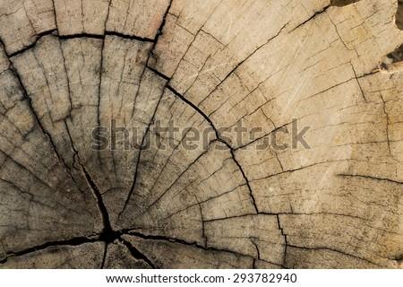 Tree Lumber Closeup gnarl - stock photo