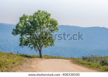 Tree, mountain, dirt road, soft focus.