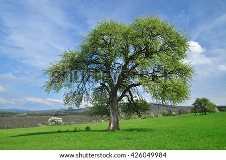 Tree nature background - stock photo