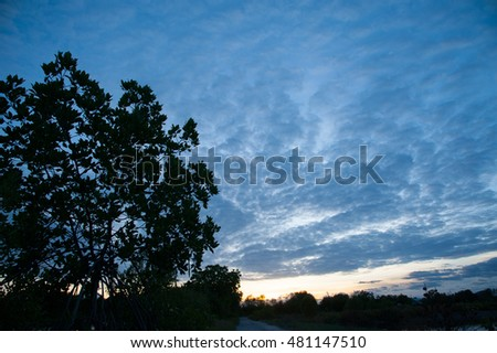 Tree near sea and mangrove with twilight sky in Thailand