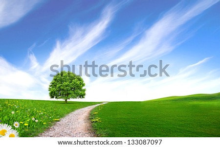 Tree near the pathway on the green grass with the stunning blue sky