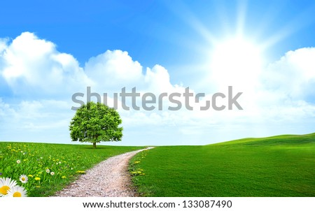 Tree near the pathway on the green grass with the stunning blue sky and bright sun - stock photo