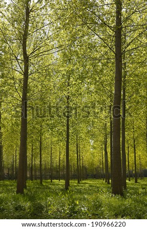 tree nursery fresh esprit - stock photo