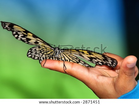 Tree Nymph Butterfly on hand