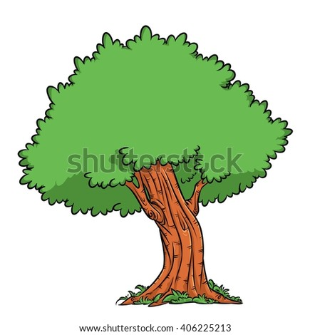 Types of Oak Tree with Pictures Images of Oak Trees